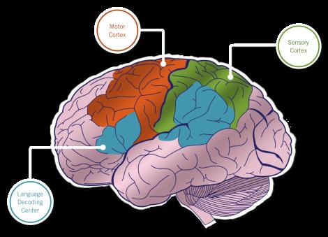 Storytelling-Brain (2)